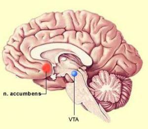 nucleus-accumbens