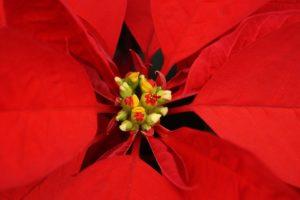 God jul! Image